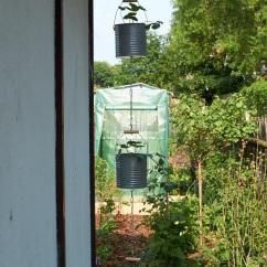 Erdbeeramplel Vertical gardening