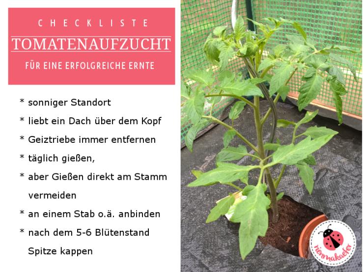 Checkliste Tomaten Aufzucht Tipps und Pflege