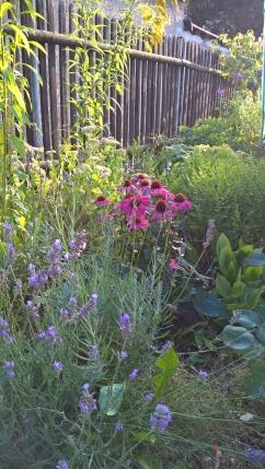 Das zukünftige Staudenbeet mit Lavendel, Sonnenhut und Co.