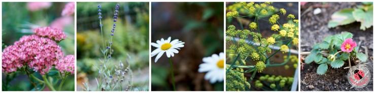 Blüten und Blumen